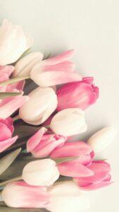 fotos de rosas para fondos de pantalla