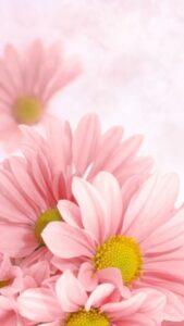 gratis fondos de pantalla con rosas
