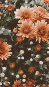 wallpaper flores vintage hd