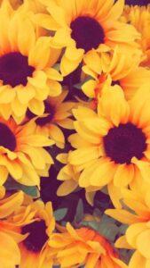 flores para fondo de pantalla