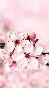 fondo de pantalla de flores gratis