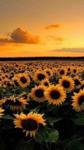 lindos fondos de flores hd