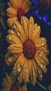 imagen con flores vintage
