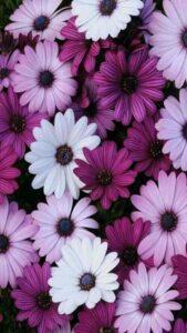 fondos vintage con flores