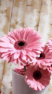 fondos con flores rosadas para movil