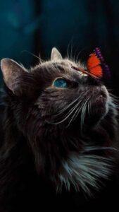 imagenes de gatos para celular