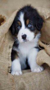 lindas imagenes para celular de perritos bonitos