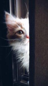 fondos con gaticos bebes gratis