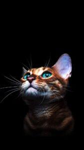 fondos con gatos lindos para celular