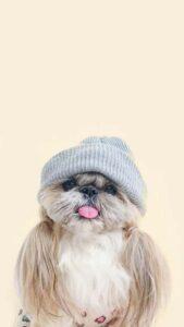 imagenes lindas de perritos gratis
