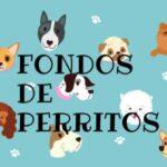 fondos para celular de perritos